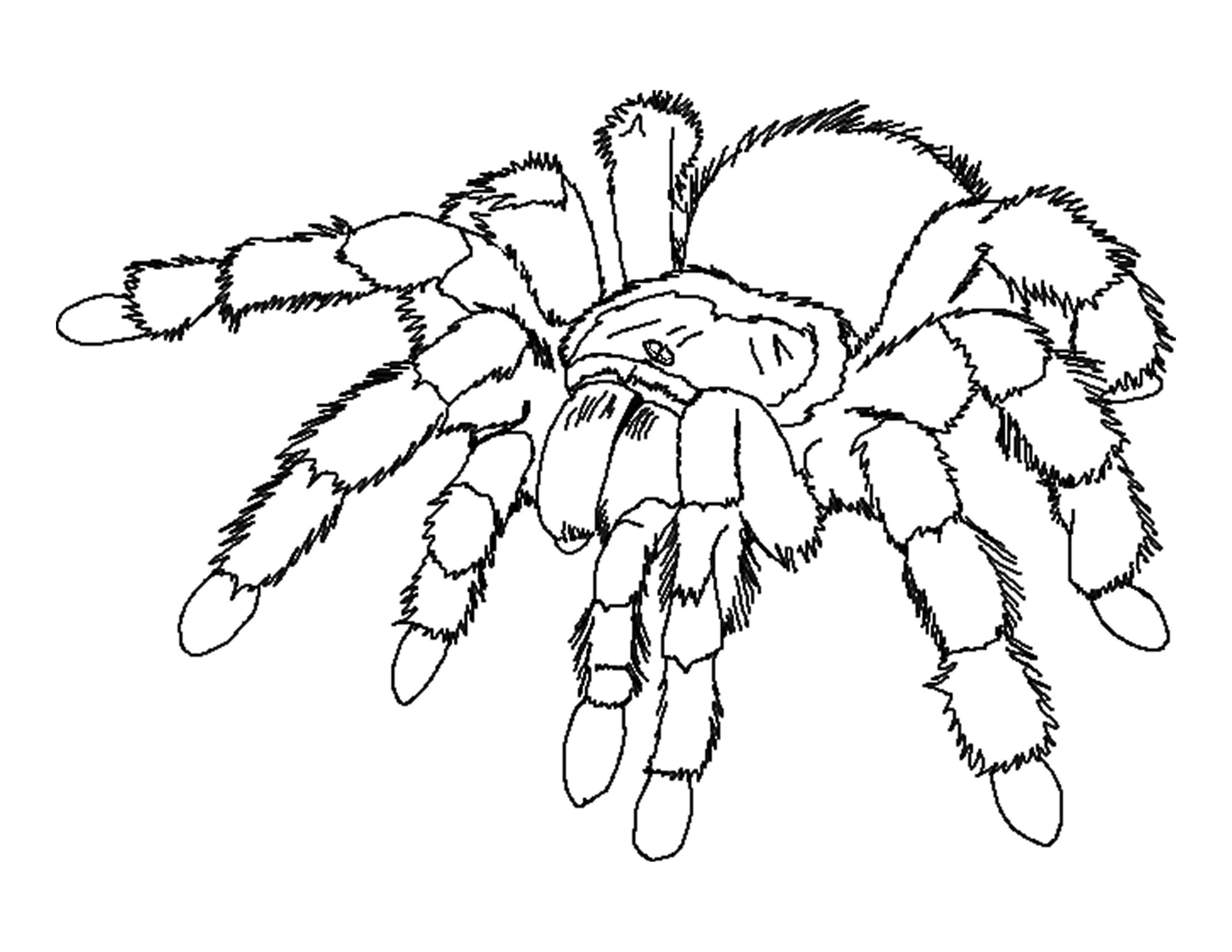 creepy spiders coloring pages - photo#9