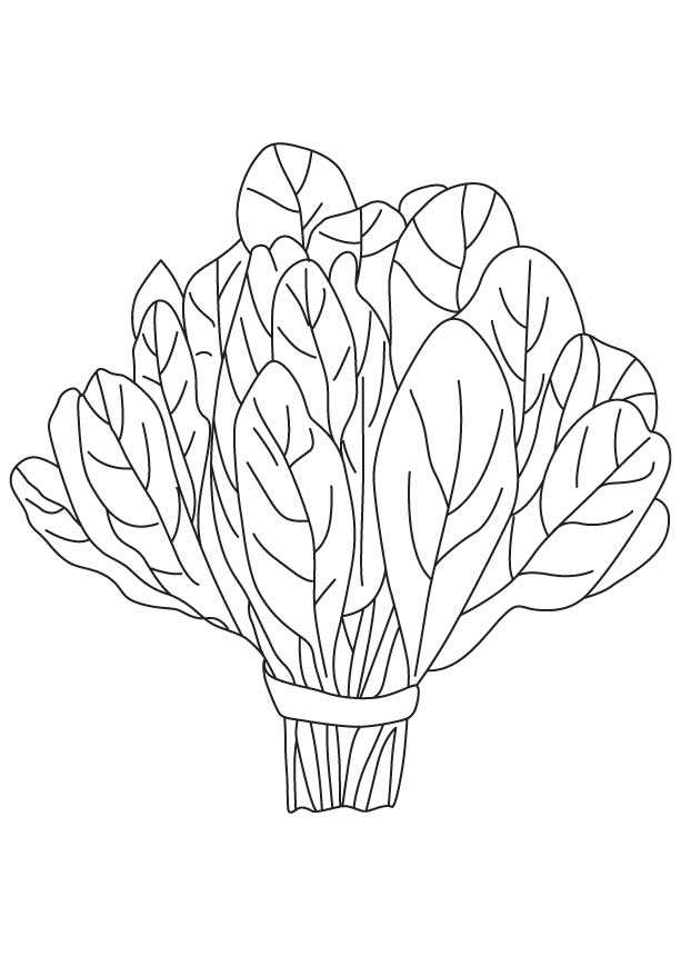 Spinach vegetable coloring page | Download Free Spinach vegetable