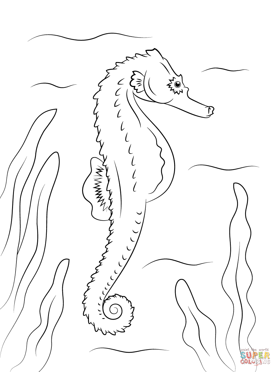 Adult Seahorse and Seahorse Babies coloring page | Free Printable ...