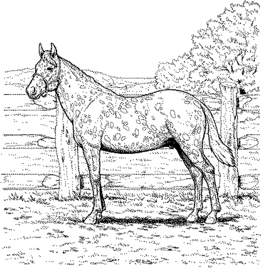 Free Printable Horse Coloring Pages For Adults