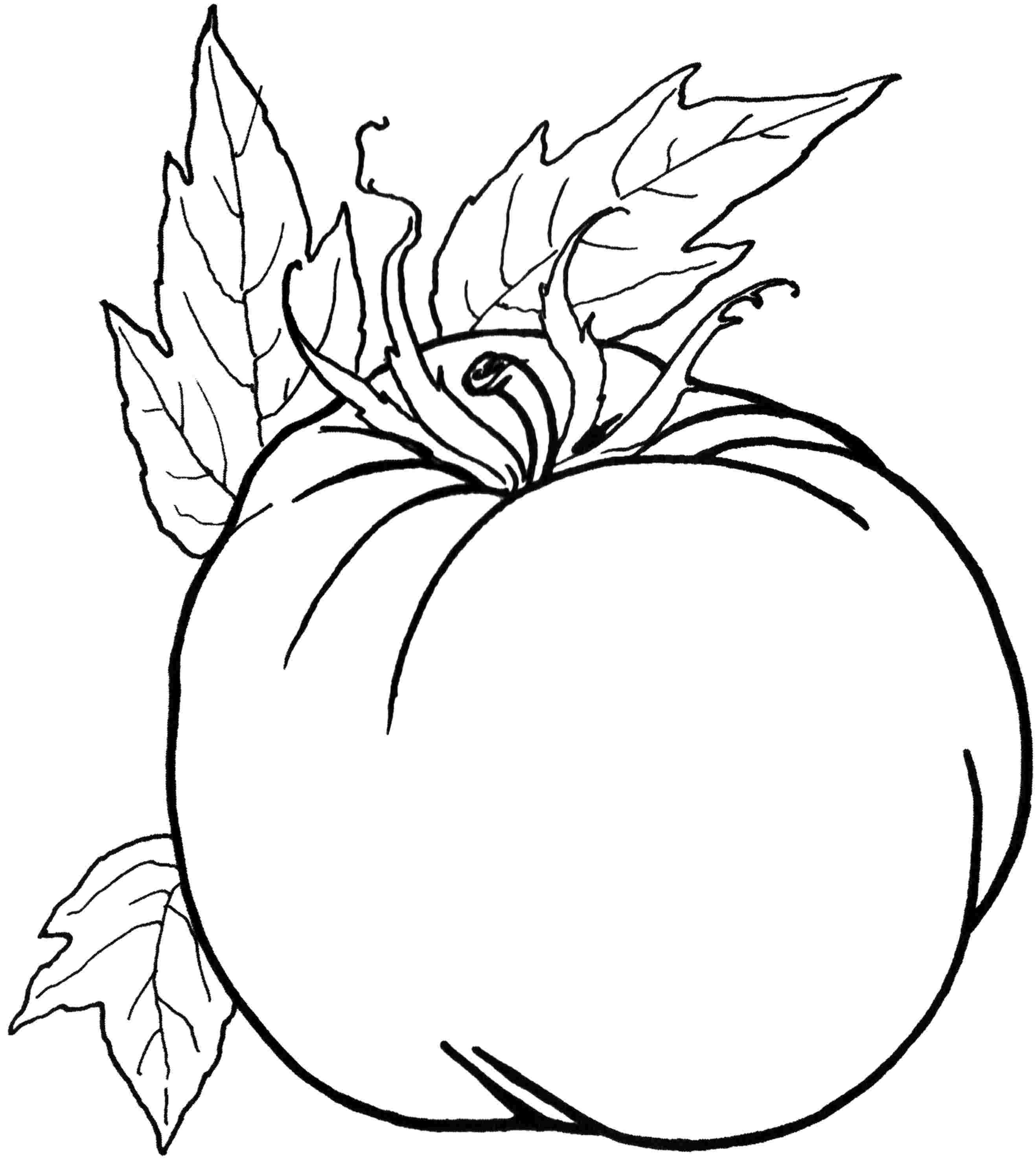 Vegetables Coloring Pages 12 Kids Printables