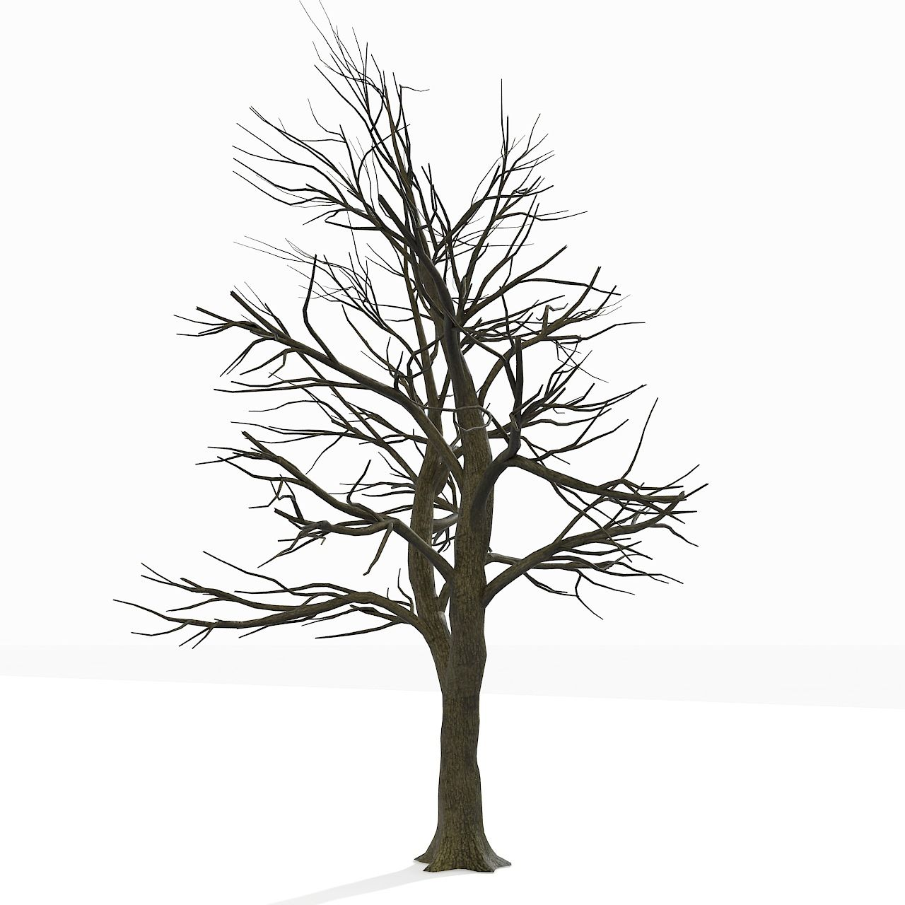 Bare fall tree coloring page coloring home for Leafless tree coloring page