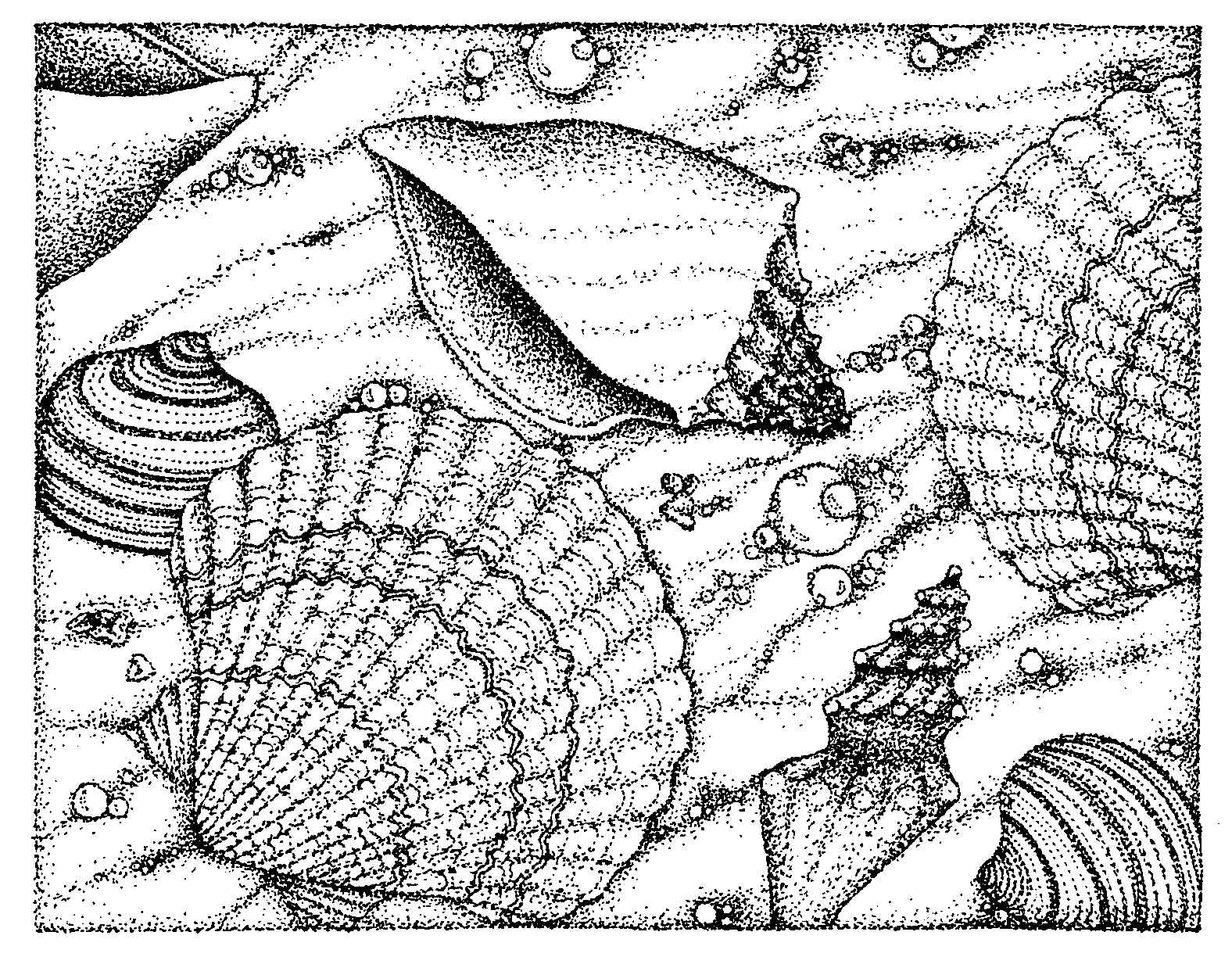 printable seashell coloring pages kids colorinenet 19311