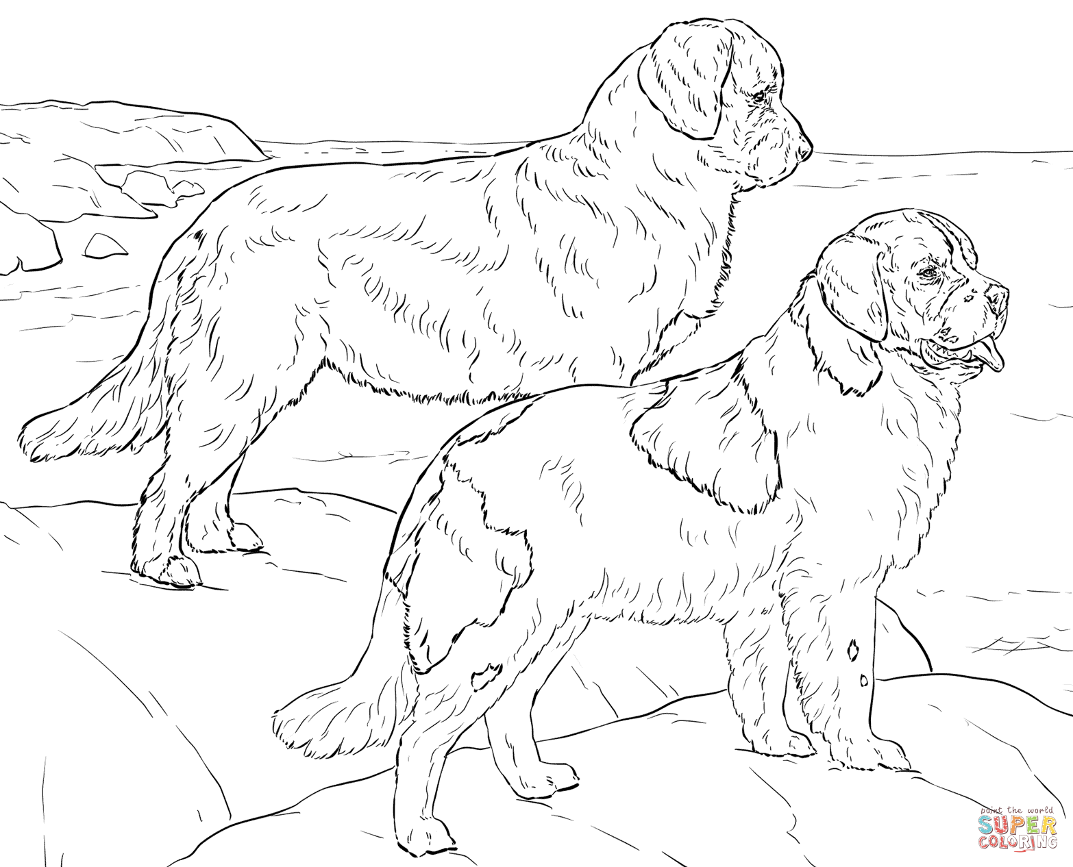 Newfoundland Dogs Coloring Page