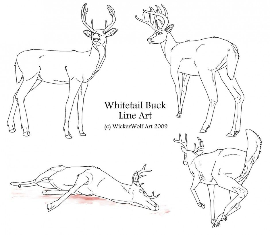 Line Drawings Of Animals Deer : White tailed deer coloring page home