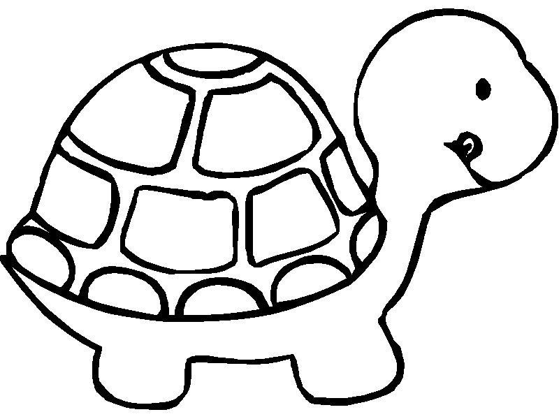 Tortoise Coloring Page AZ Coloring Pages