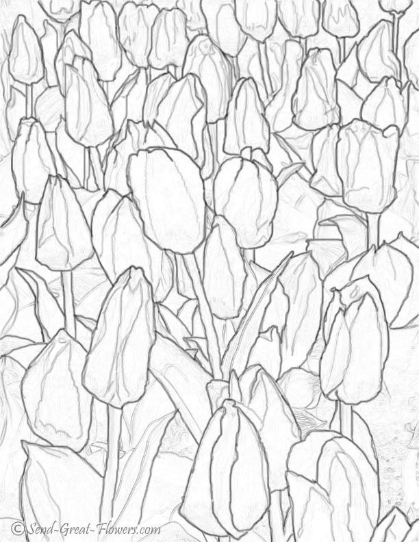 Tulips Coloring Page - Coloring Home