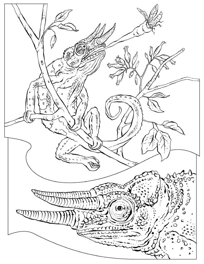 Reptiles Coloring Pages Coloring Home