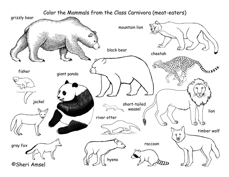 deciduous forest animals coloring pages - photo#36