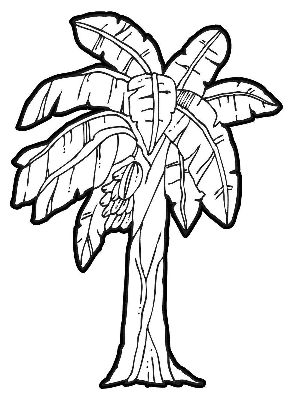 Banana Tree Drawing Clipart - Free to use Clip Art Resource