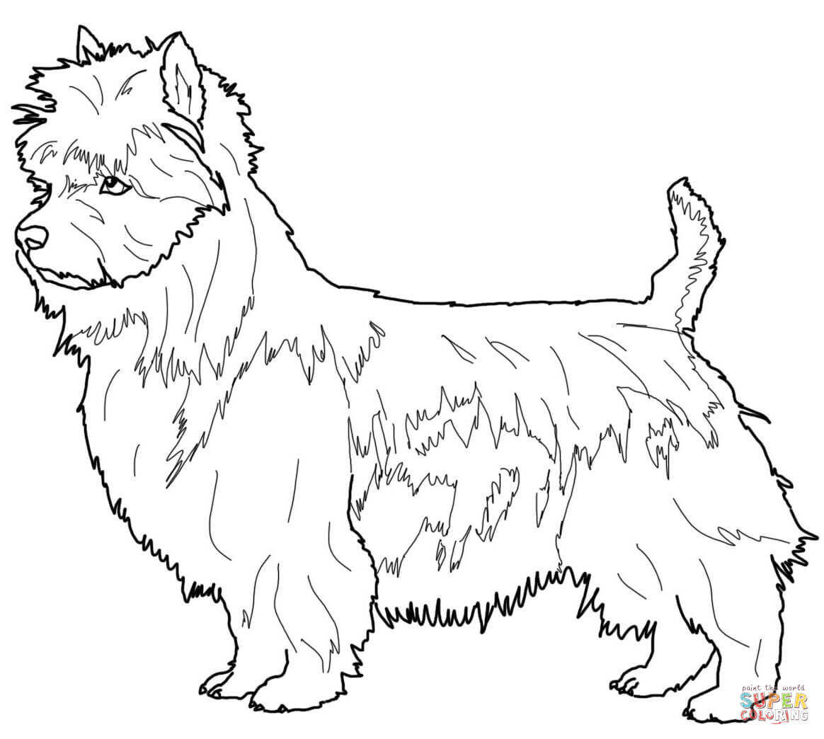 Australian Terrier coloring page | Free Printable Coloring Pages