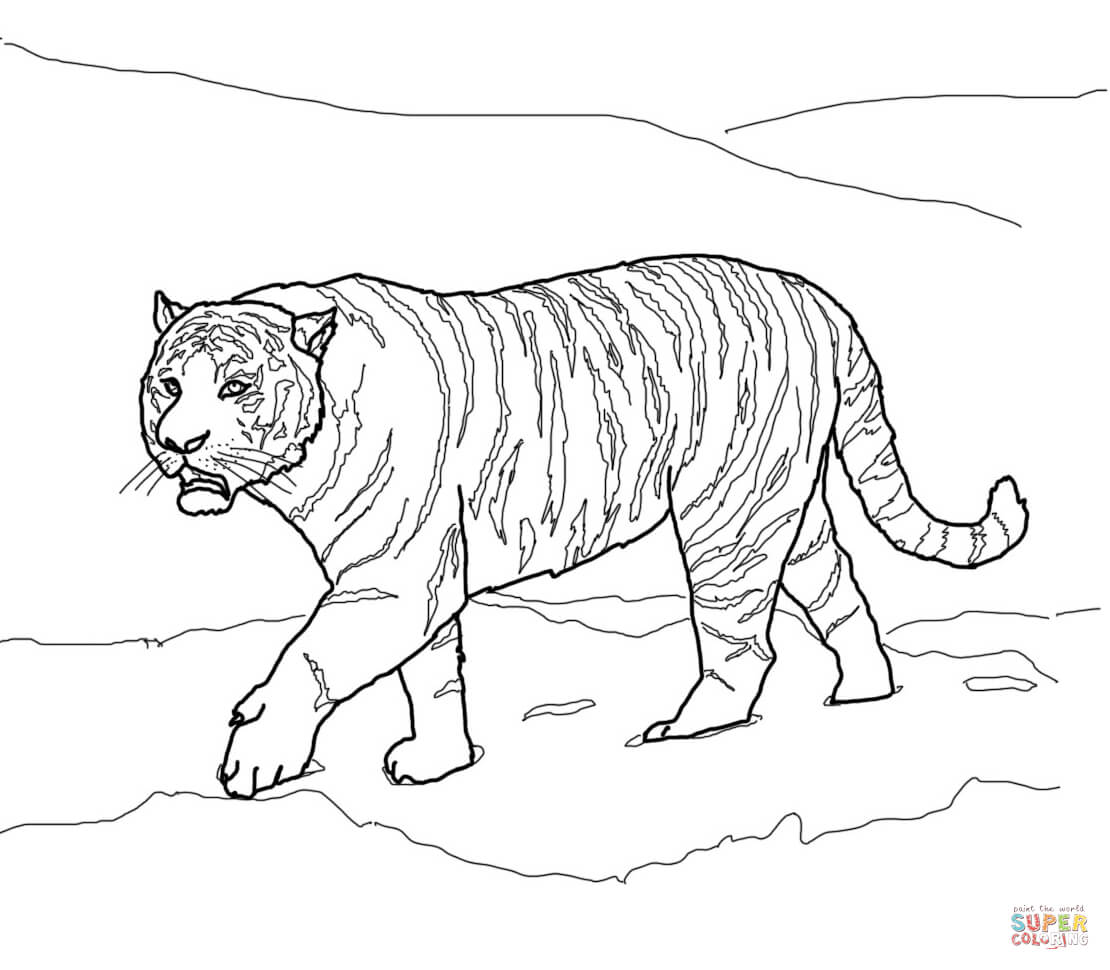 tigers coloring pages free coloring pages - Coloring Pages Tigers Print