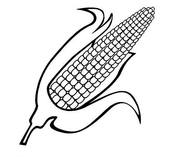 Corn Stalk Coloring Pages Coloring Home