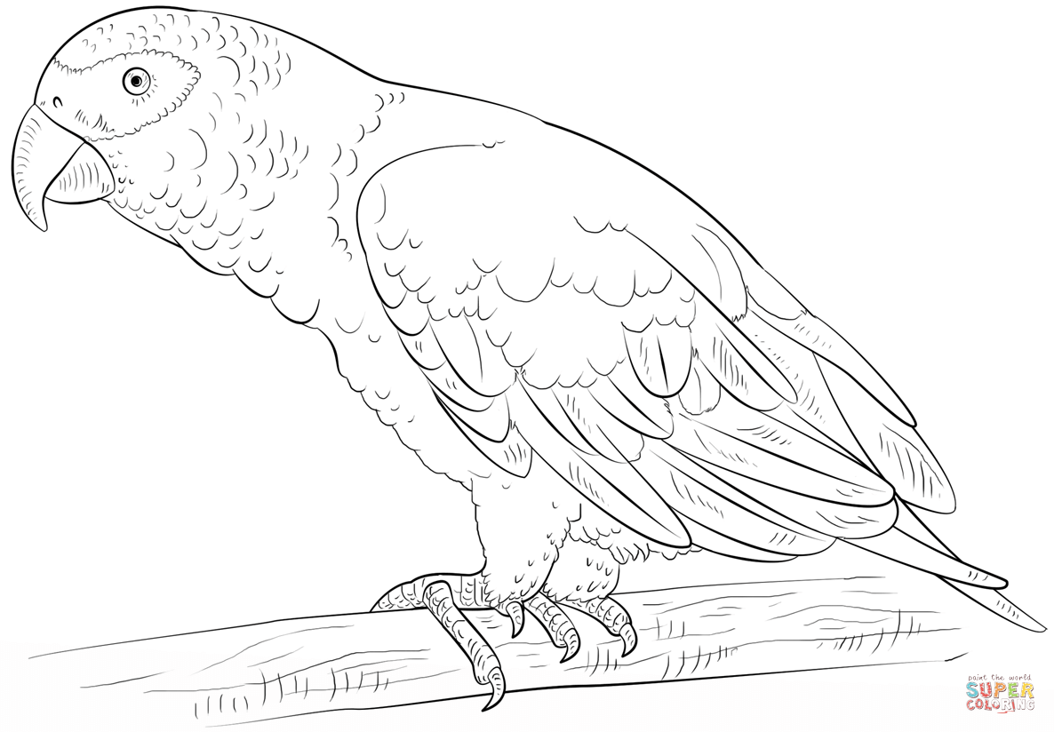 african grey parrot coloring page free printable coloring pages