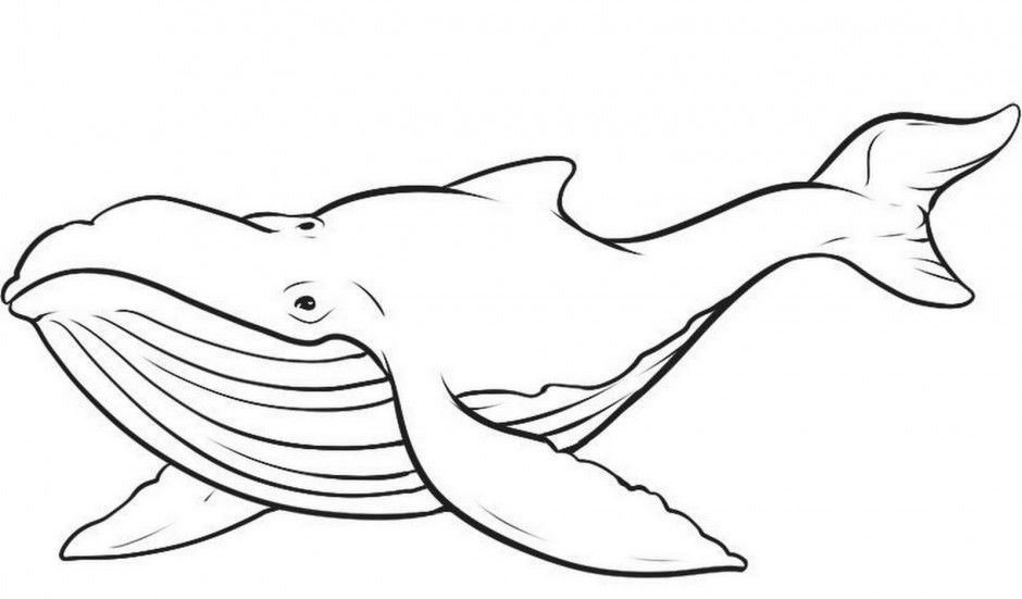 123 Coloring Pages : Free Coloring Pages Of Blue Whales Fedical