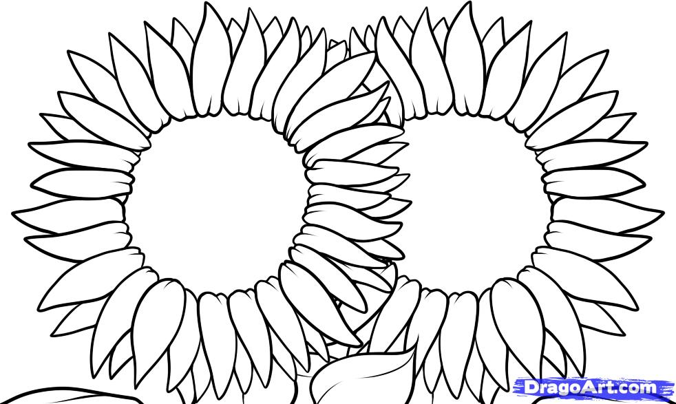 sunflower pictures to color az coloring pages