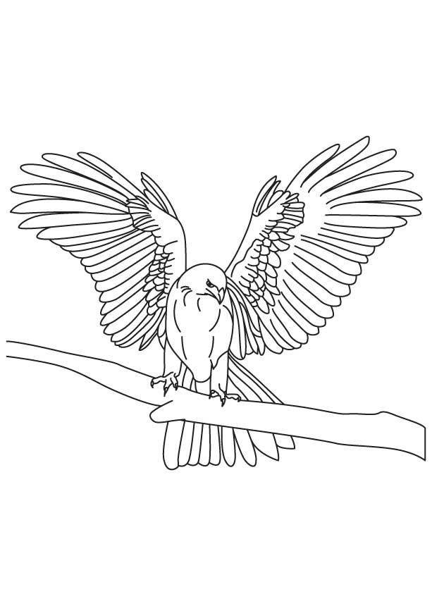 Golden Eagle Coloring Page