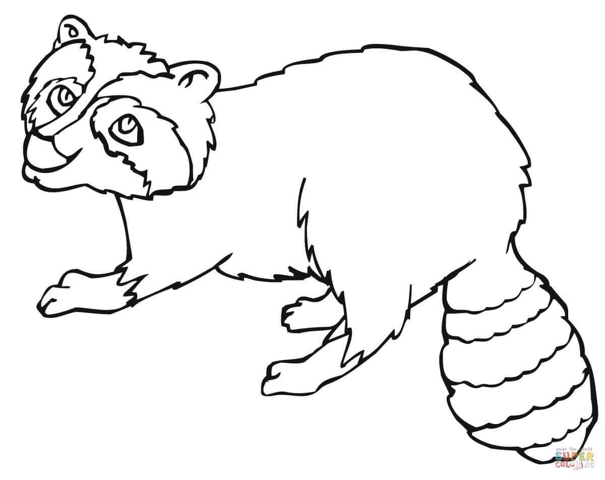 19 Free Pictures For Raccoon Coloring Page Temoonus