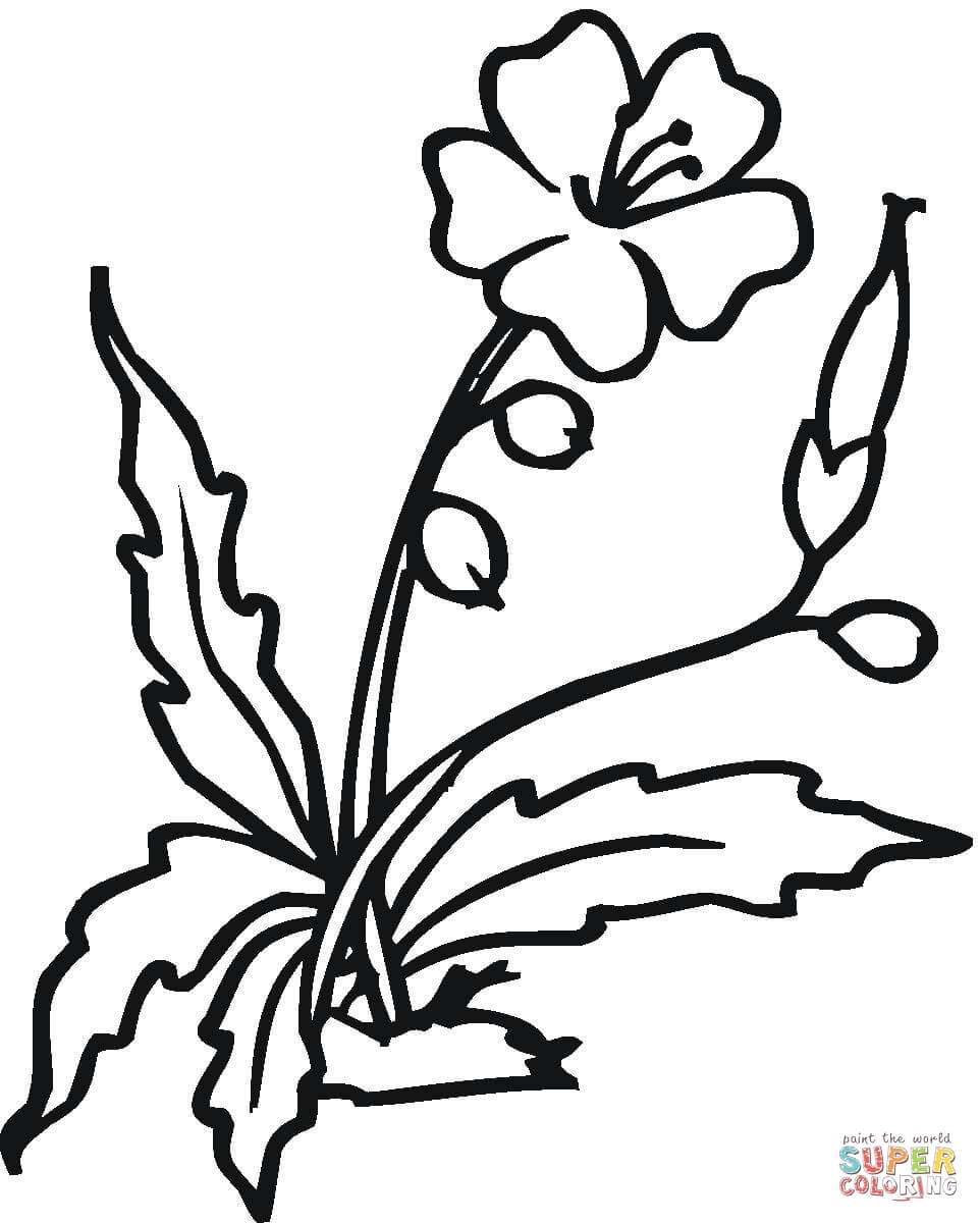 Hibiscus Flower coloring page | Free Printable Coloring Pages