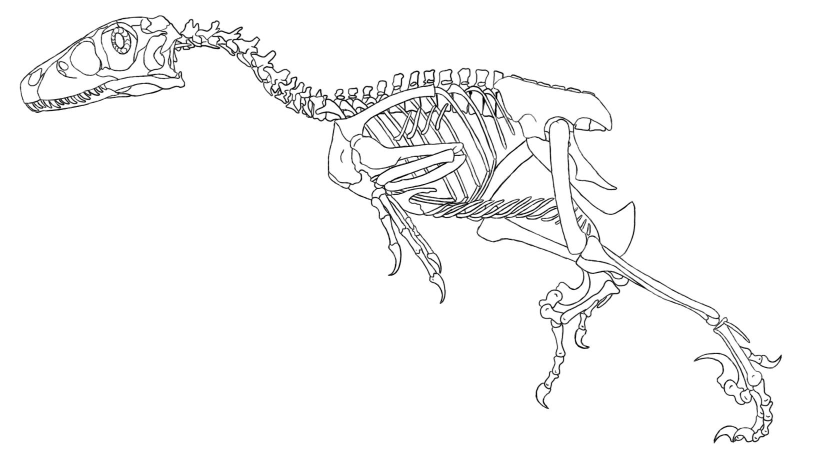 Dltk Coloring Pages Dinosaurs Skeleton