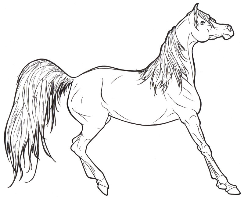 Realistic Horse Coloring Pages To Print - Coloring Home
