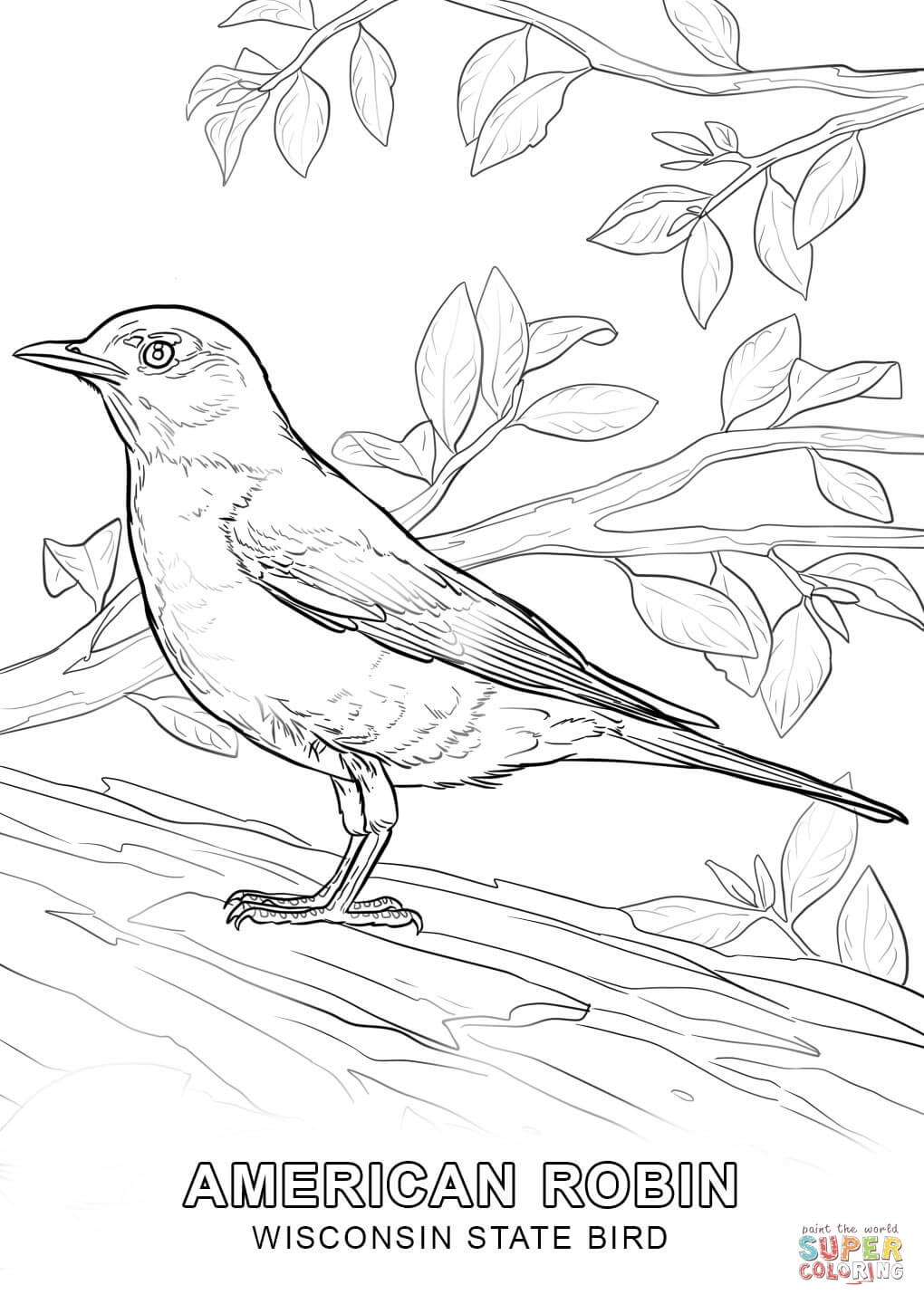 Coloring Page Of Alabama State Bird Coloring Page