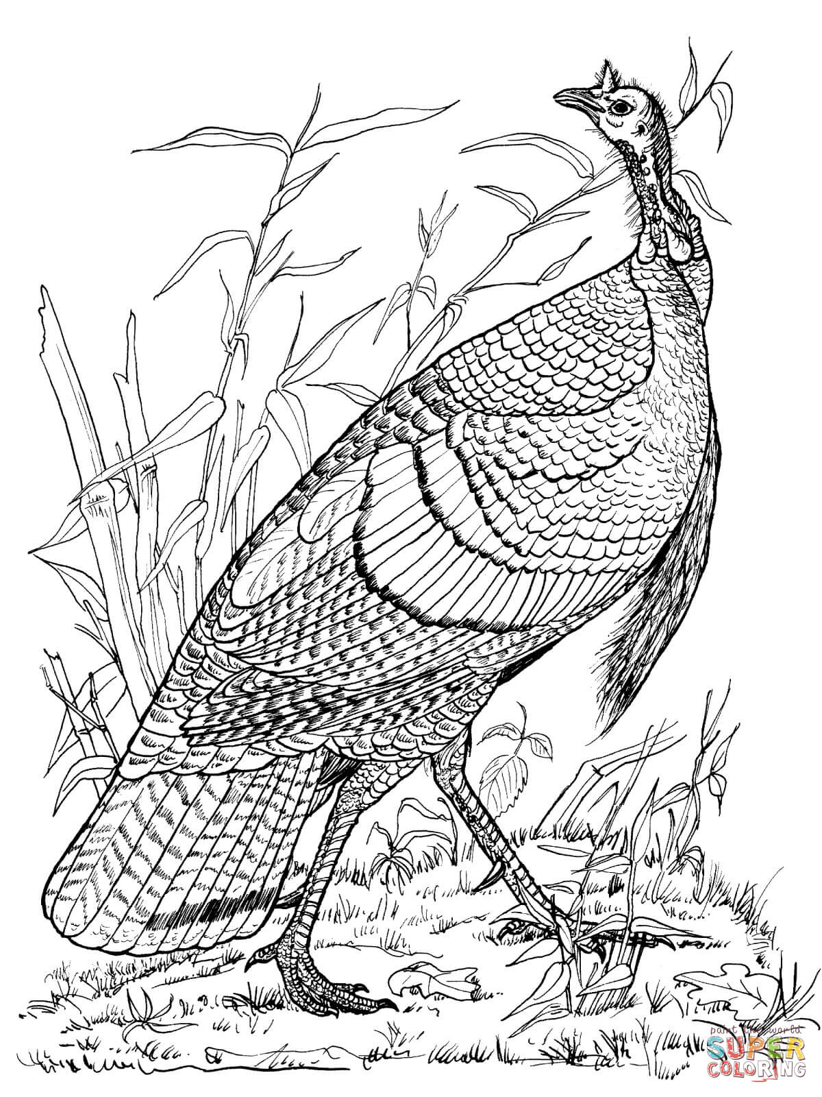 Wild Turkey Hen coloring page | Free Printable Coloring Pages
