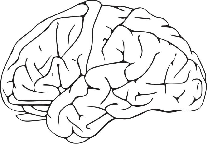 human brain coloring page coloring home human brain coloring page coloring home