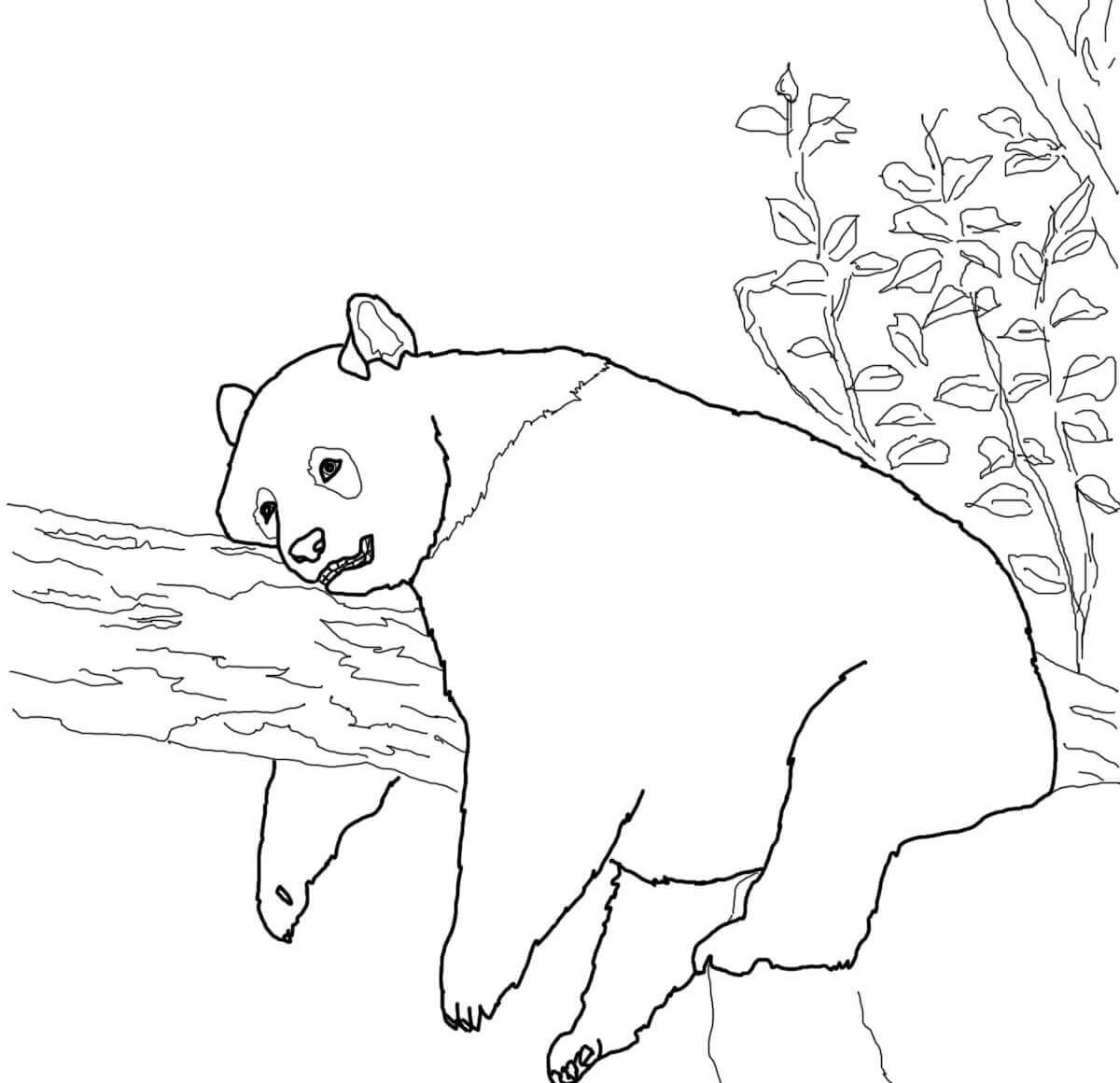 Red Panda Coloring Page - Coloring Home