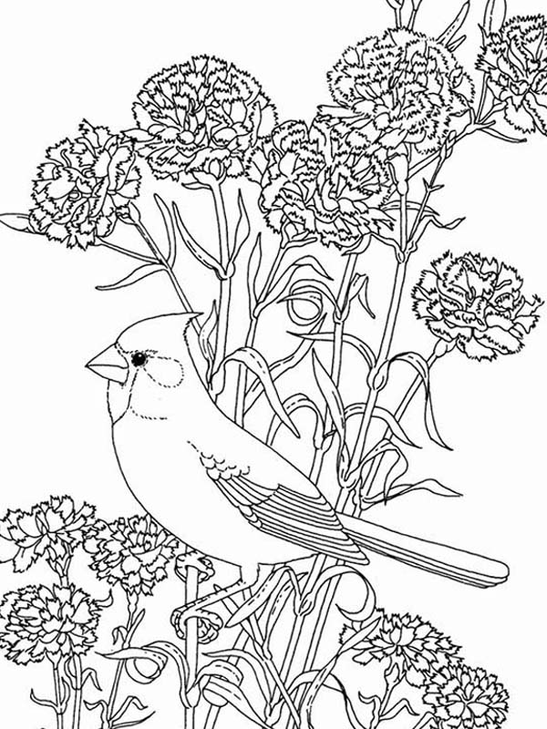 - Birds And Flowers Coloring Pages - Coloring Home