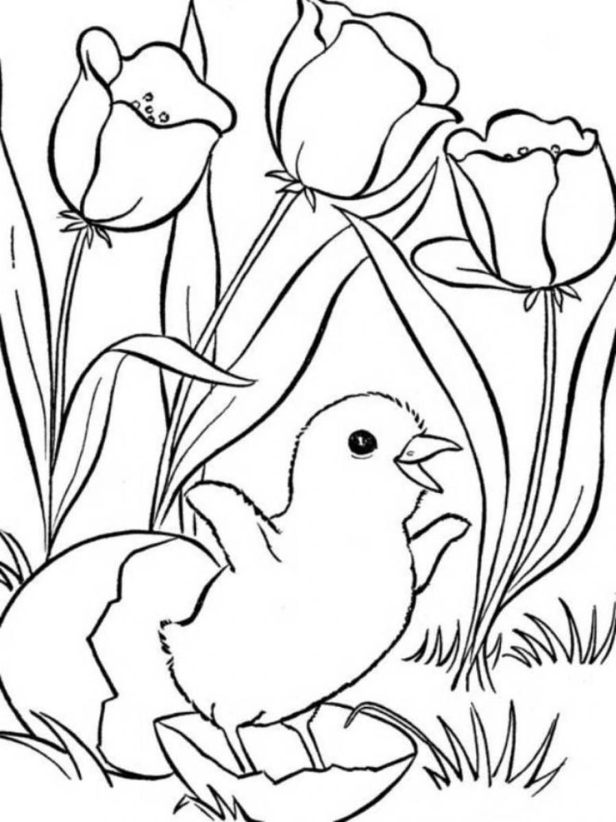 Coloring pages about spring - Spring Coloring Pages Only Coloring Pages