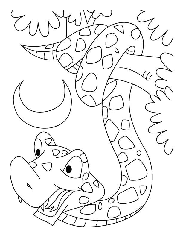 14 Pics Of Reticulated Snake Coloring Pages - Boa Constrictor ...
