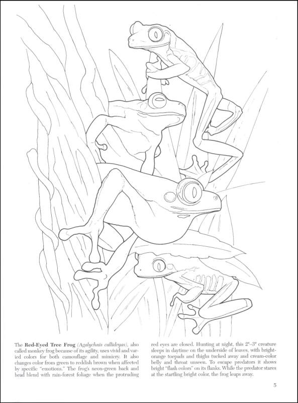 Camouflage Coloring Pages Coloring Home
