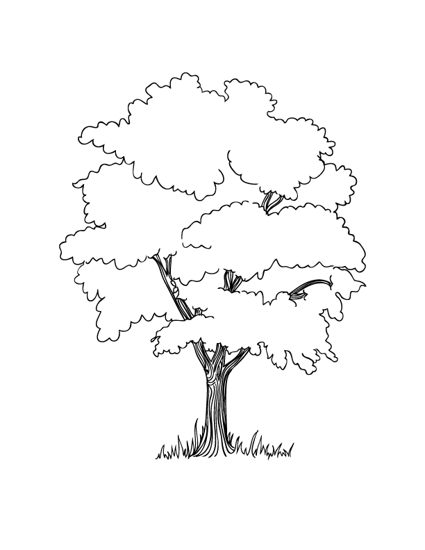 Tree Color Sheet - Free Coloring Sheets