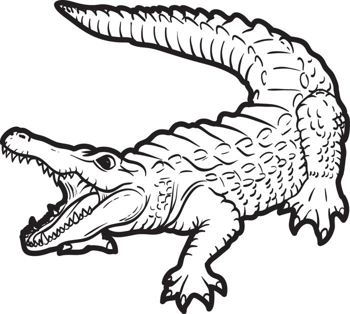 Crocodile Drawings For Kids Coloring Page Coloring Home