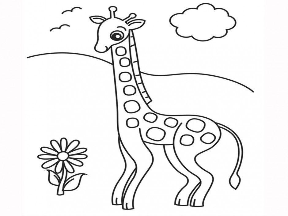 Okapi Coloring Pages - Photos Coloring Page Ncsudan.Org