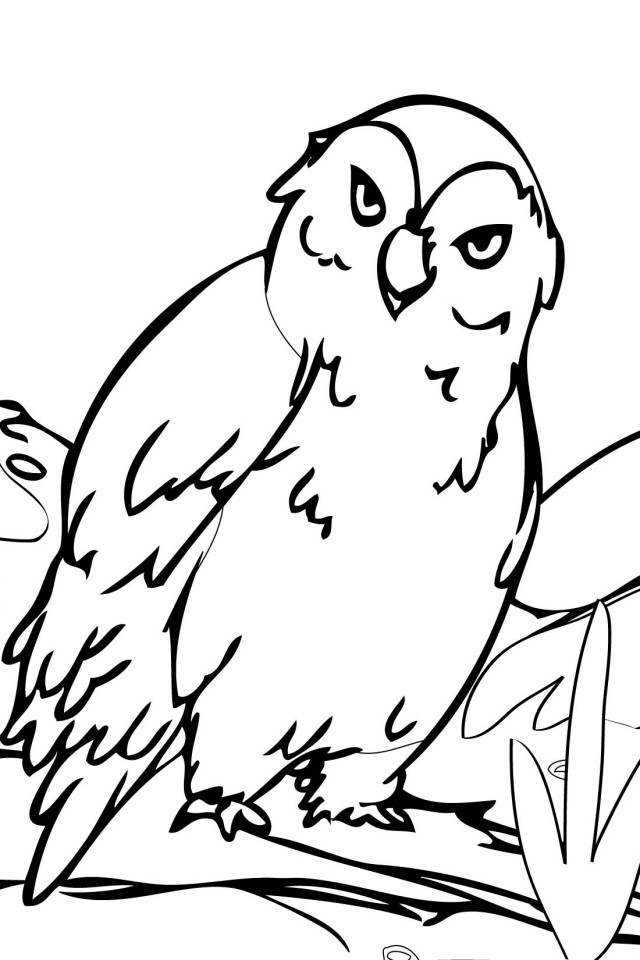 Arctic coloring pages az coloring pages for Polar animal coloring pages