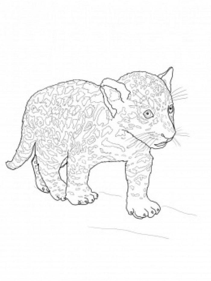Jaguar Coloring Page - Coloring Home