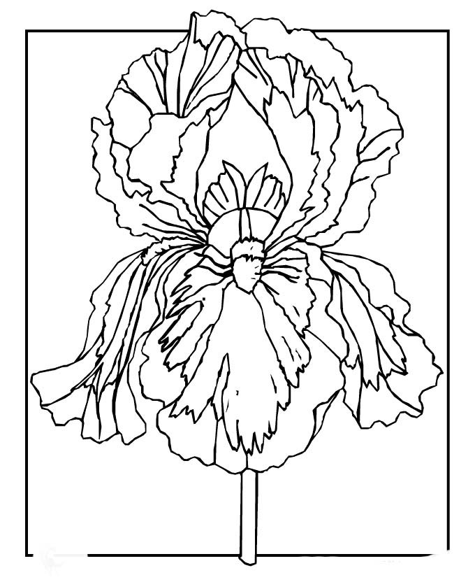 spring day coloring pages - spring flowers coloring pages for kids spring day