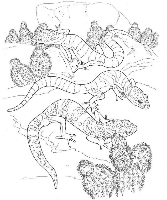 gecko coloring pages to print - photo#14