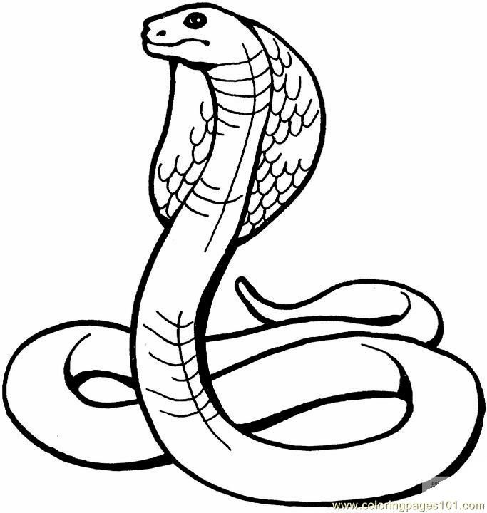 lizard and snake coloring pages - photo#26