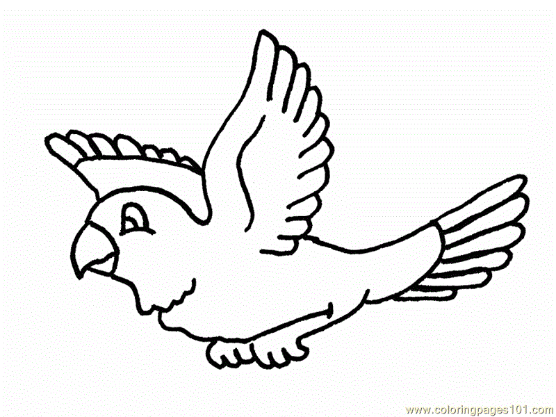 Coloring Pages Birds Flying