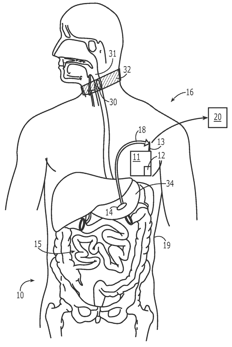 Coloring Pages Of Digestive System Coloring Home Digestive System Color Pages