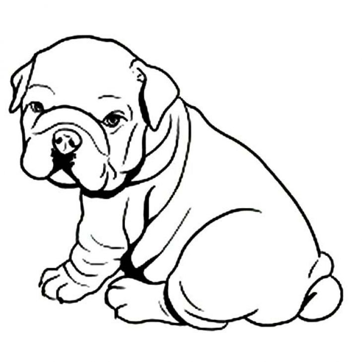 8 Pics Of Animal Coloring Pages Bulldog Bulldog Coloring Pages