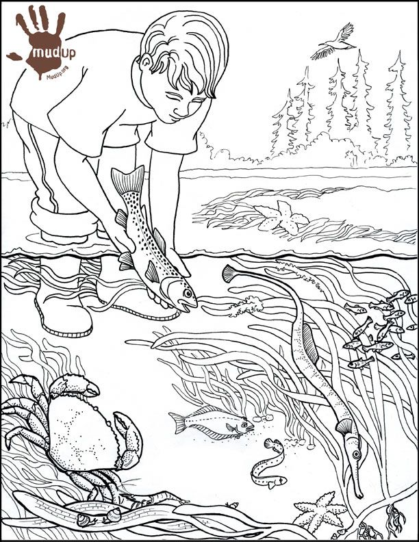 sketch coloring pages - photo#11