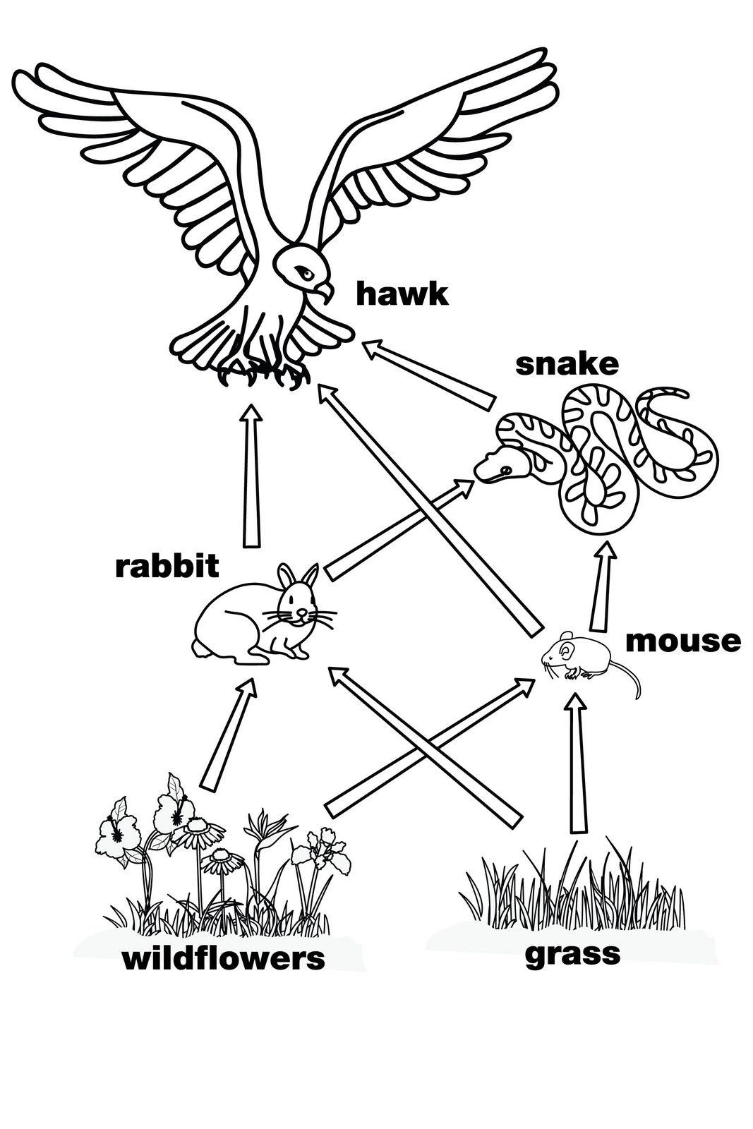 Food Web Diagram: Complex Food Web, Energy Flow through a Frog ...