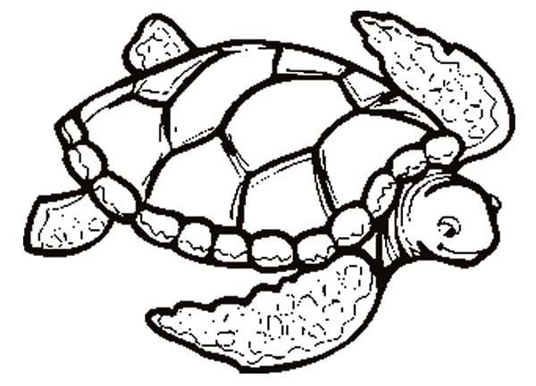 Easy Turtles Coloring Pages Free Sheets