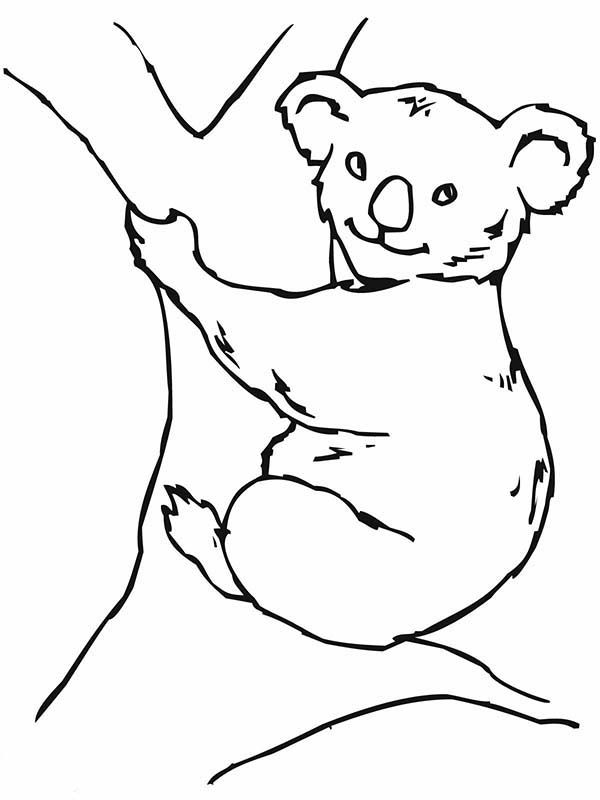 Koala free coloring pages for Koalas coloring pages