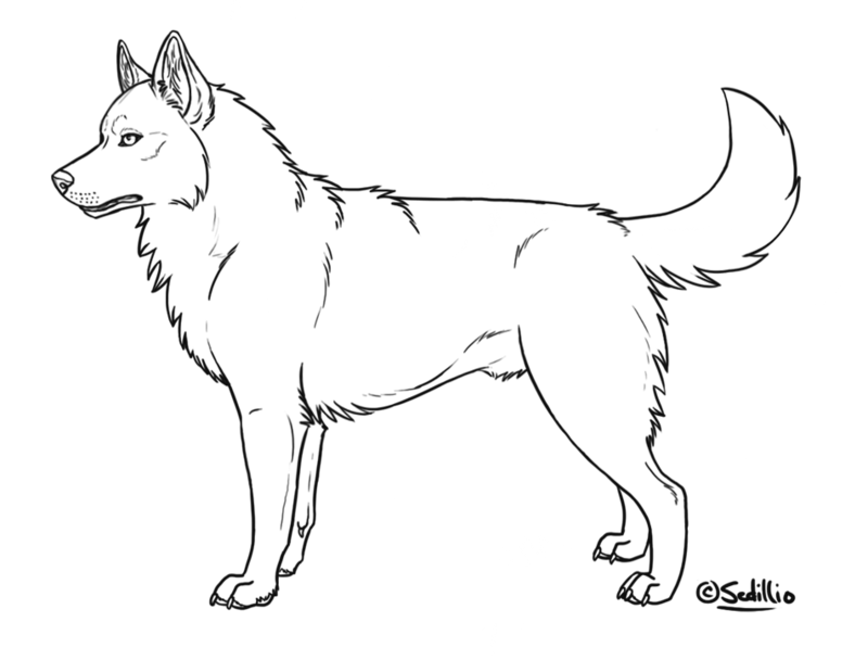 - Siberian Husky Coloring Pages - Coloring Home