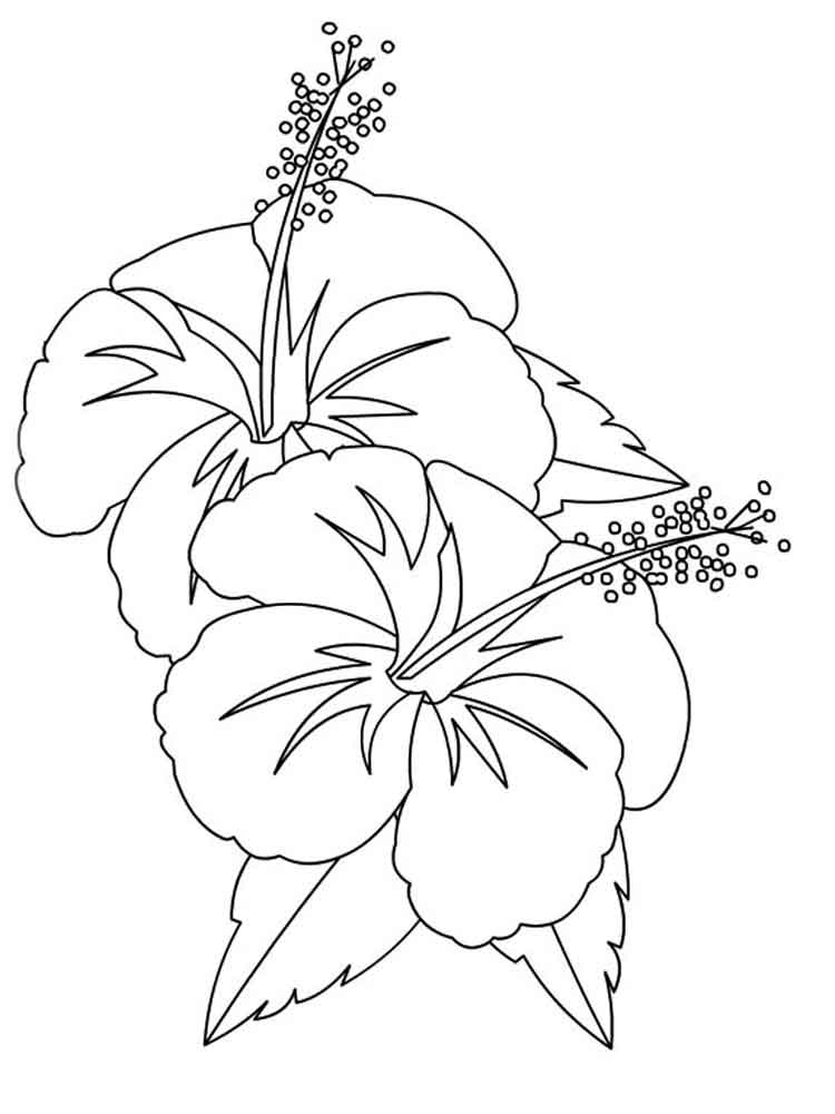 Coloring Pages Of Hibiscus Flowers : Hibiscus flower coloring page home